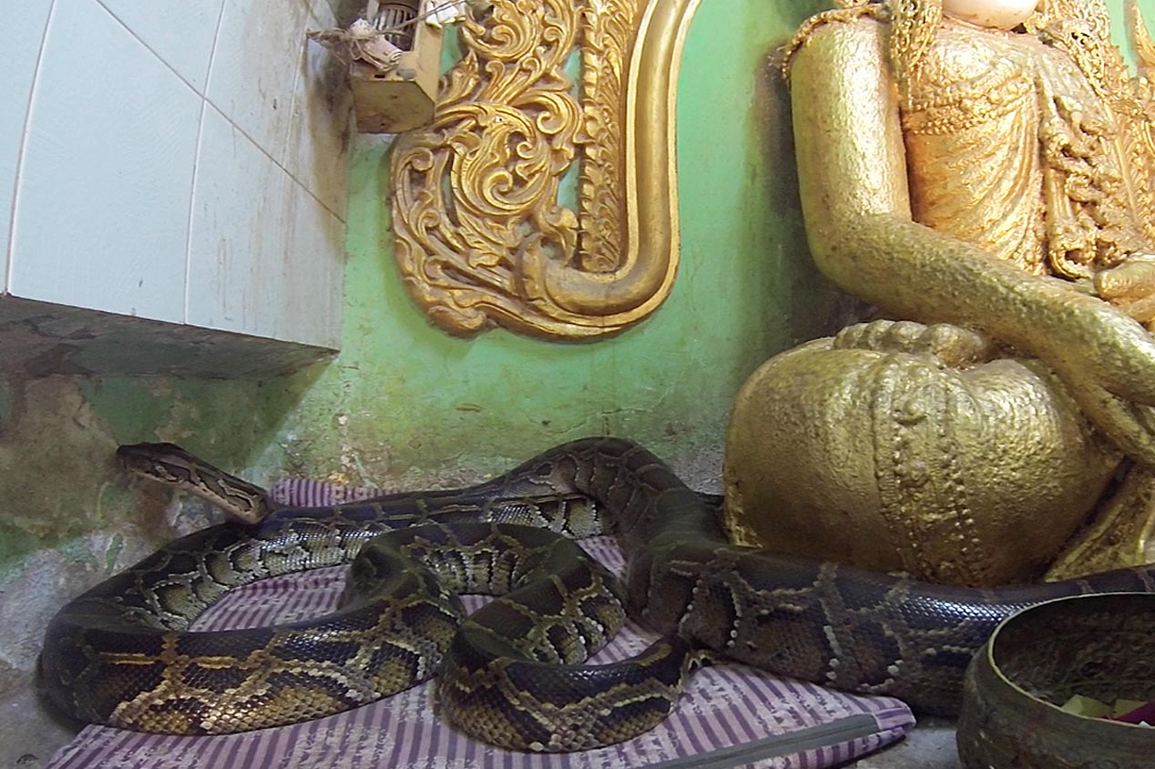tdm80.com_temple_serpent_a-cote-bouddha
