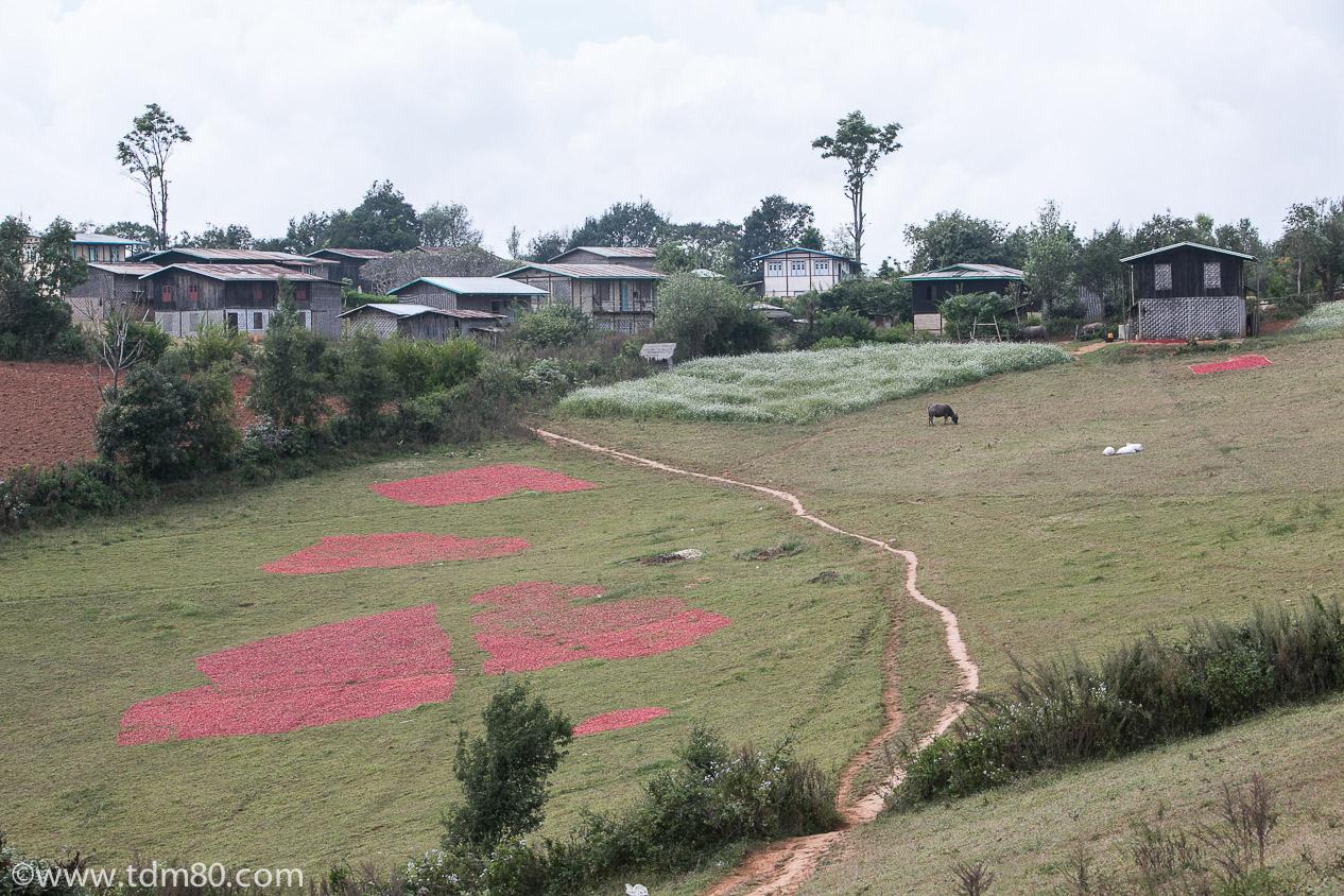 tdm80_Birmanie_Kalaw_Lac_Inley_Trek_10