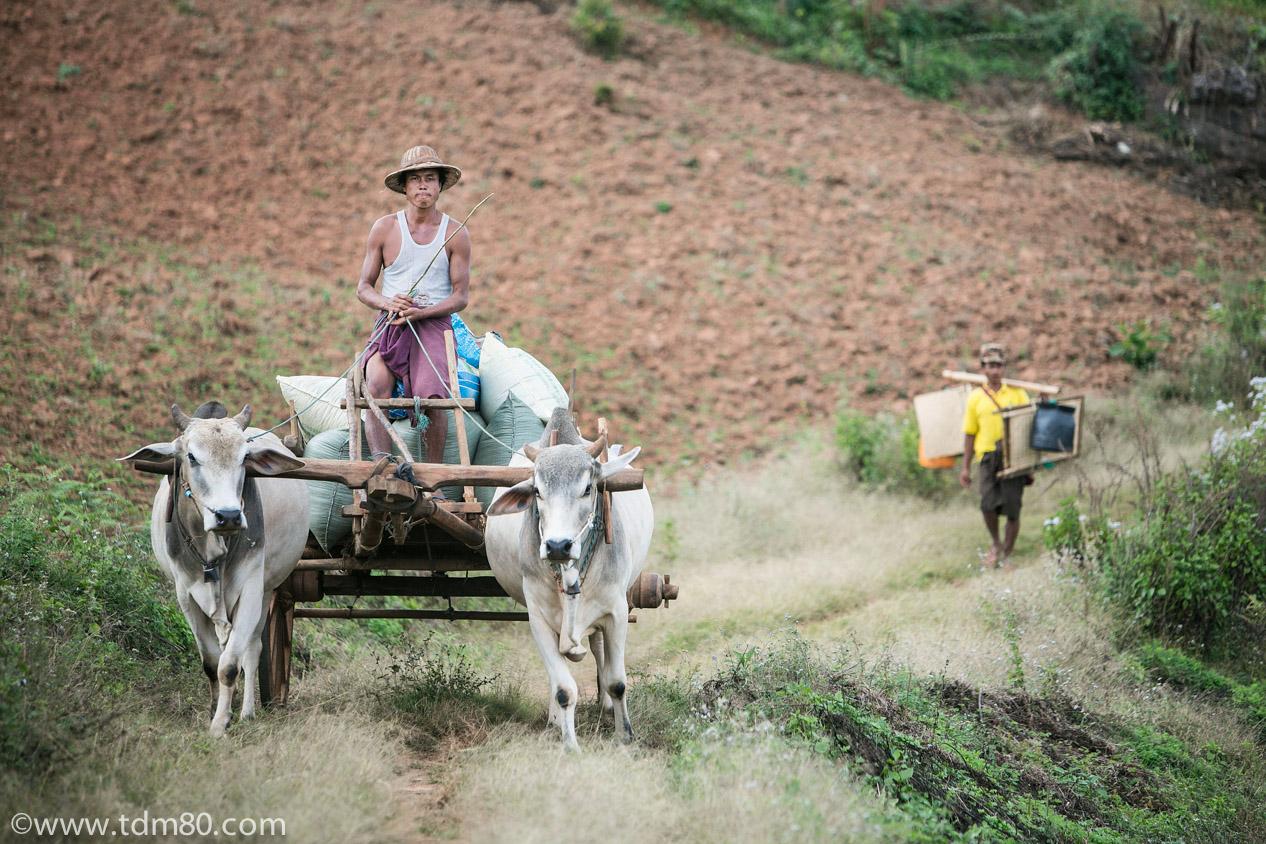 tdm80_Birmanie_Kalaw_Lac_Inley_Trek_34