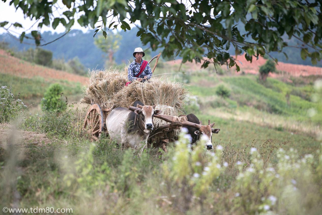 tdm80_Birmanie_Kalaw_Lac_Inley_Trek_35