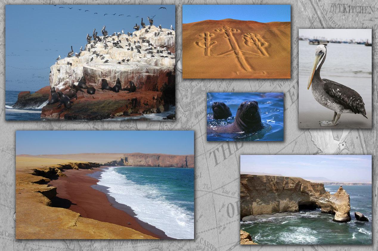 Tdm80_Paracas_reserve_Naturelle_illustration_article