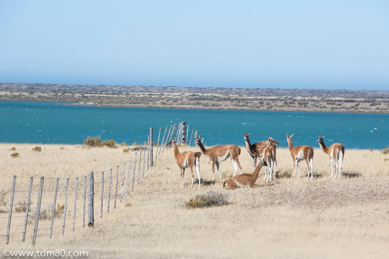 Visiter la péninsule de Valdés
